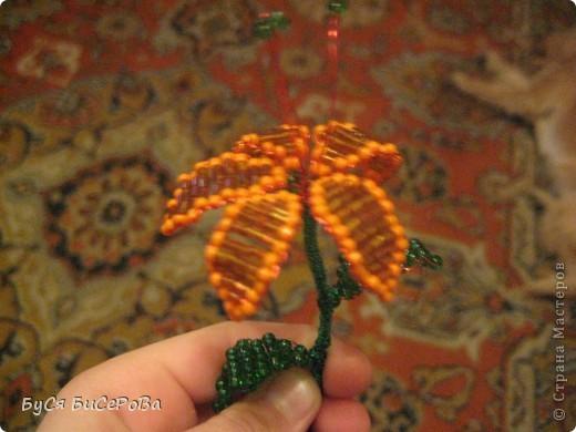 Мои лилии.... Такие красивые!!! фото 2