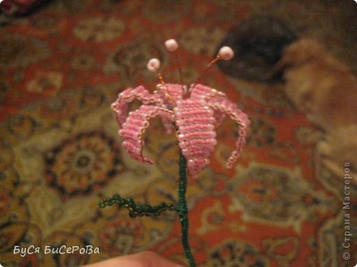 Мои лилии.... Такие красивые!!! фото 4