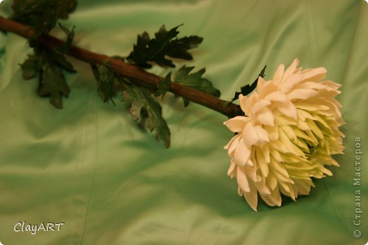 Мастер-класс Лепка Лепим самый осенний цветок - хризантему  Пластика