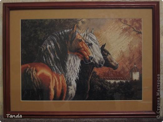 Мои любимые лошадки...
