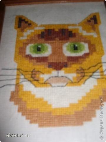 котята фото 4