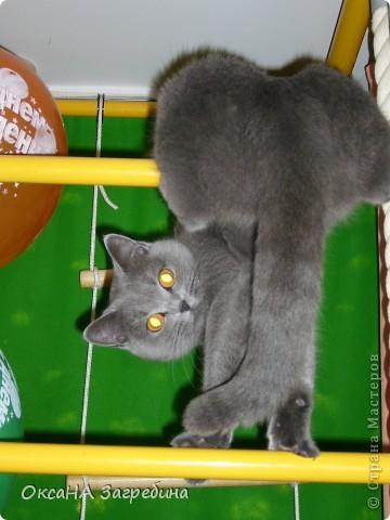 Мы уже знакомили Вас с нашей Дымкой: https://stranamasterov.ru/node/43388 Но она тут снова нас порадовала своими кошачьими манерами, а мы хотим поделиться этой радостью с Вами. :) Вот здесь она облюбовала осенний венок из искуственных листьев. Правда, у нее отличный эстетический вкус?! :)) фото 2