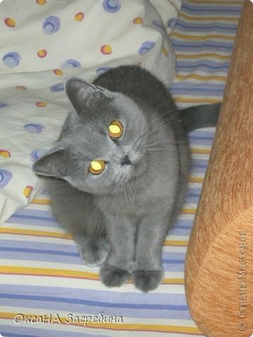Мы уже знакомили Вас с нашей Дымкой: http://stranamasterov.ru/node/43388 Но она тут снова нас порадовала своими кошачьими манерами, а мы хотим поделиться этой радостью с Вами. :) Вот здесь она облюбовала осенний венок из искуственных листьев. Правда, у нее отличный эстетический вкус?! :)) фото 5