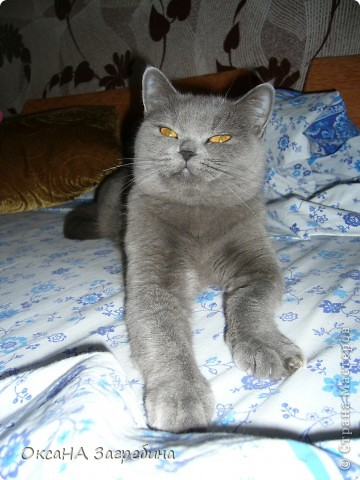Мы уже знакомили Вас с нашей Дымкой: https://stranamasterov.ru/node/43388 Но она тут снова нас порадовала своими кошачьими манерами, а мы хотим поделиться этой радостью с Вами. :) Вот здесь она облюбовала осенний венок из искуственных листьев. Правда, у нее отличный эстетический вкус?! :)) фото 6