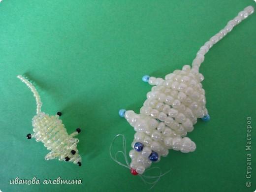 мышки фото 1