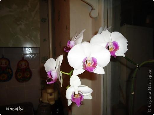 Цвела в апреле, и вот снова цветёт. фото 3