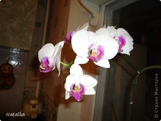 Цвела в апреле, и вот снова цветёт. фото 4