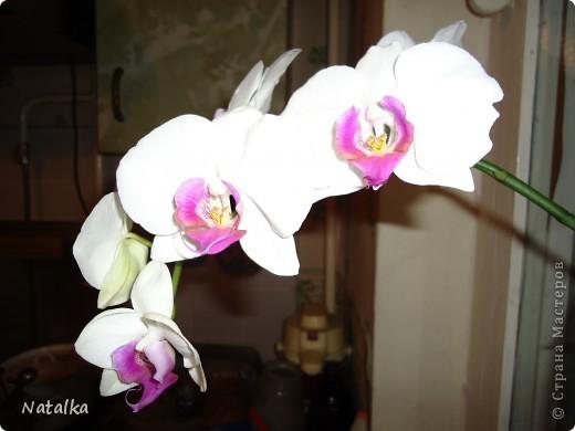 И вновь зацвела орхидея - Не определена.