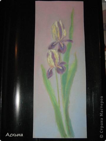 Это мой первый рисунок пастелью. Рисовала по самоучителю. фото 7