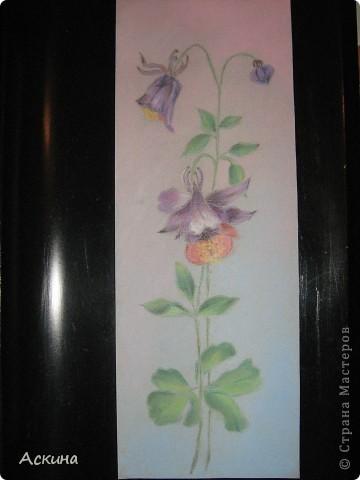 Это мой первый рисунок пастелью. Рисовала по самоучителю. фото 8