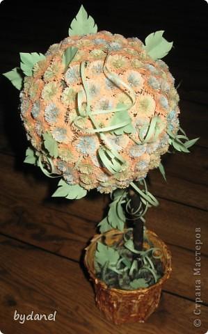 """вот и у меня выросло """"дерево счастья"""" фото 1"""