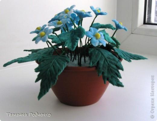 """Вот такие скромные цветочки """"выросли"""" у меня. Качество, извините, плохое (батарейки разрядились). фото 4"""