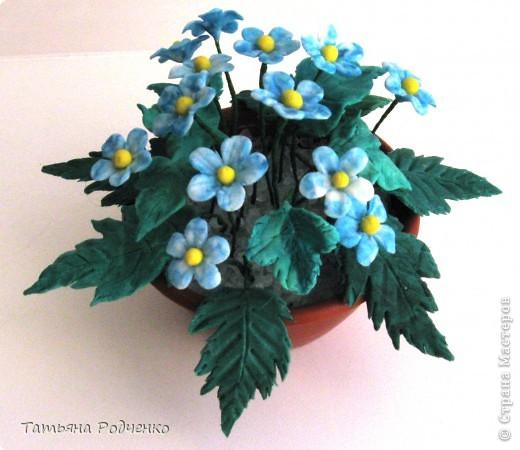 """Вот такие скромные цветочки """"выросли"""" у меня. Качество, извините, плохое (батарейки разрядились). фото 2"""