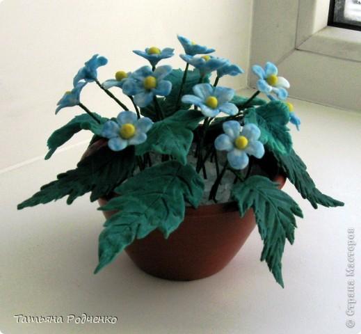 """Вот такие скромные цветочки """"выросли"""" у меня. Качество, извините, плохое (батарейки разрядились). фото 1"""