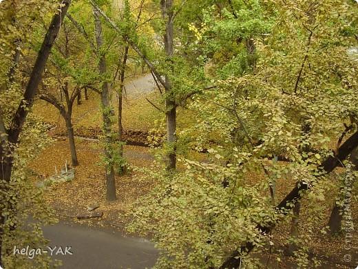Эти снимки сделаны в разные годы. Река Кинель в Самарской области. фото 17