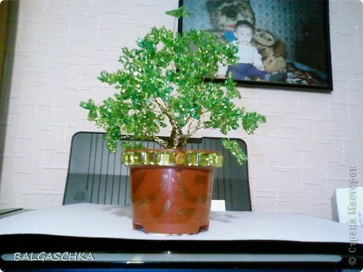 первое дерево фото 1