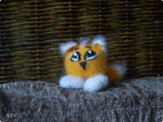 Котенок. фото 1