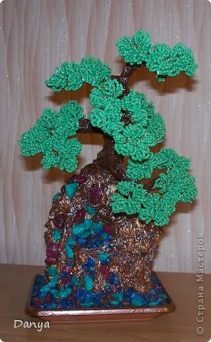 дерево на камне фото 1