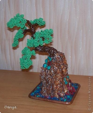 дерево на камне фото 2