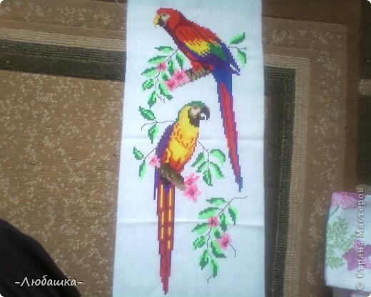Попугаи на ветке фото 1