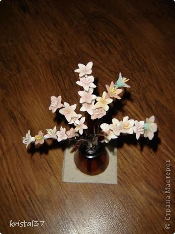 Вот она... Моя сакура!!! 77 цветочков на 7 ветках... фото 3