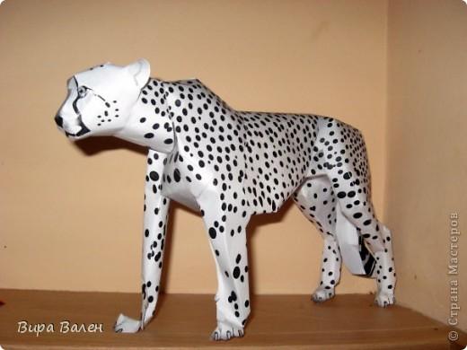 Пятнистый гепард