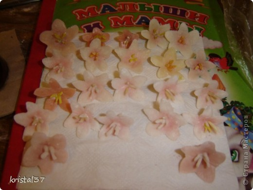 Вот она... Моя сакура!!! 77 цветочков на 7 ветках... фото 2