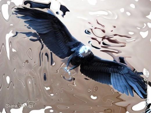 Орлан фото 1