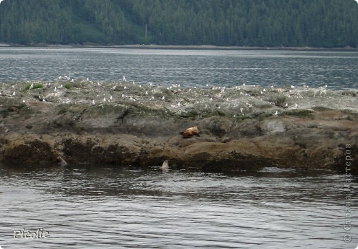 Аляска во всей красе,однако :) Часть 2-ая фото 15