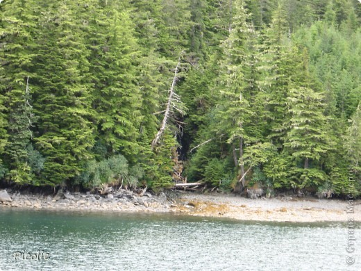 Аляска во всей красе,однако :) Часть 2-ая фото 10