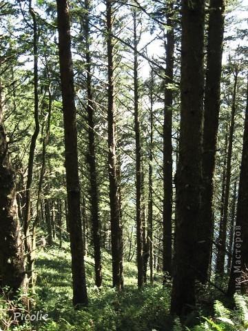 Штат Орегон.Часть 1-ая фото 6