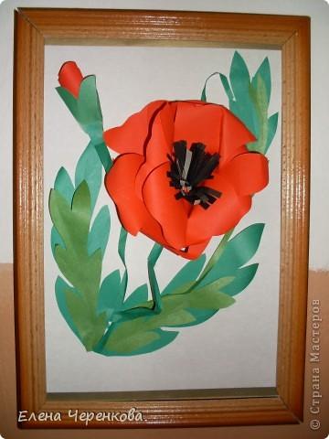 Мак - мой любимый цветок, поэтому вы неоднократно сможете увидеть его в моих работах... фото 1