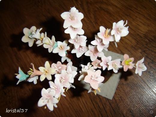 Вот она... Моя сакура!!! 77 цветочков на 7 ветках... фото 5