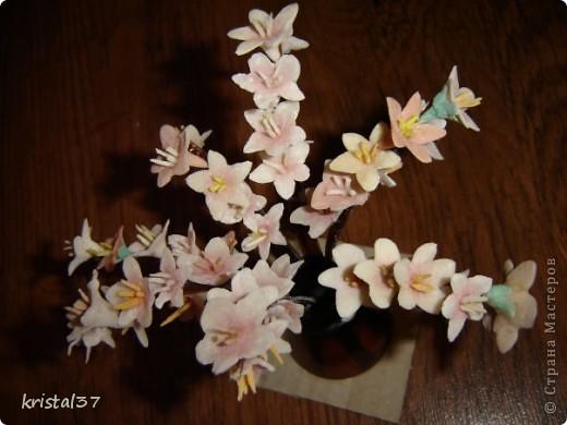 Вот она... Моя сакура!!! 77 цветочков на 7 ветках... фото 4