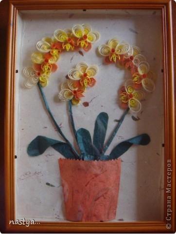 Орхидеи =) фото 1