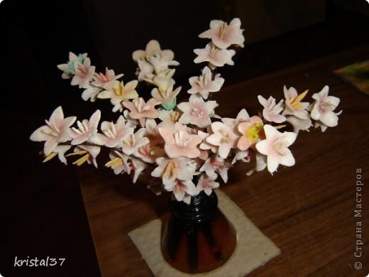 Вот она... Моя сакура!!! 77 цветочков на 7 ветках... фото 6
