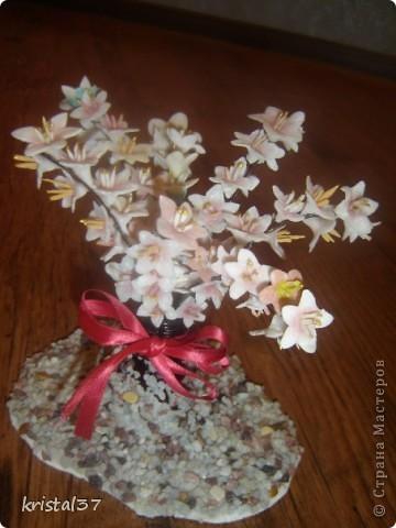 Вот она... Моя сакура!!! 77 цветочков на 7 ветках... фото 1