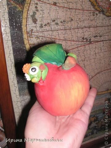 Яблоко с гусеницей  фото 2