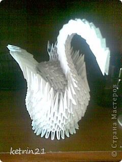 мои лебеди фото 4