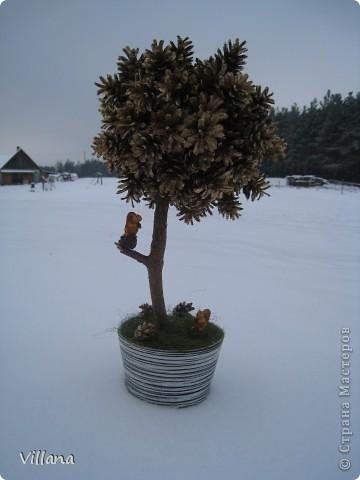 Это дерево из шишек я сделала в подарок на день рождение моему старшему брату.Шишки покрыты золотой краской, но на снегу этого не видно:( фото 1