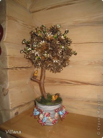 Это дерево из шишек я сделала в подарок на день рождение моему старшему брату.Шишки покрыты золотой краской, но на снегу этого не видно:( фото 7