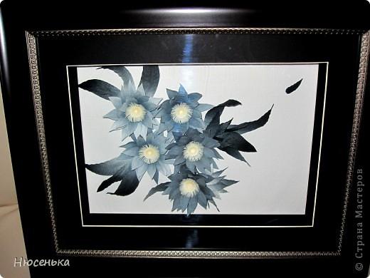 Таинственные цветы. фото 4