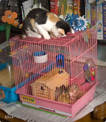Это Поня. Она любит кушать, очень спокойная, но и поиграть любит, бегает как зайчик, ласковая, любит забираться в тёплые места. Мяфкает только когда ей больно или когда хочет кушать.  фото 24
