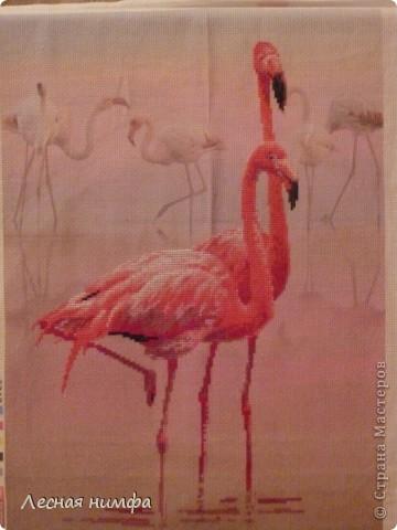 Розовые Фламинго...моя новая вышивка... фото 1