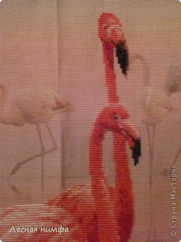 Розовые Фламинго...моя новая вышивка... фото 3