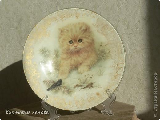 """""""Кошки"""" фото 2"""