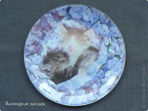"""""""Кошки"""" фото 3"""