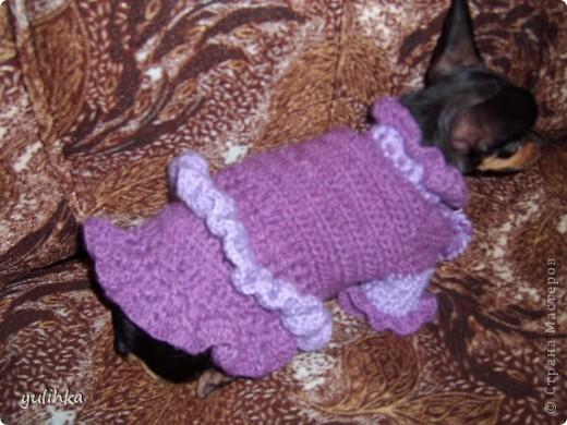 Попробовала связать одежду  собакам .Вот что получилось. Это тойтерьер моей кумы. фото 4