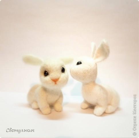 Крольчата фото 1