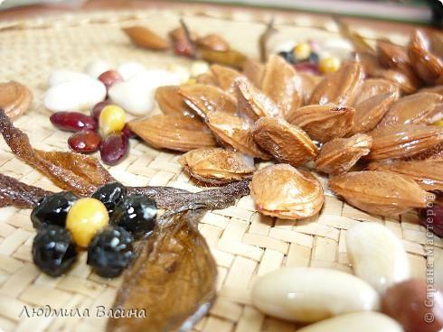 """""""Богатство природы"""".Работа из семян и косточек фруктов. фото 3"""